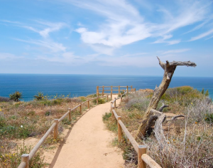 Torrey Pines Nature Reserve